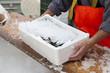 Leinwanddruck Bild - Fishermen covering with ice fresh sardines