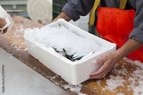 Leinwanddruck Bild Fishermen covering with ice fresh sardines