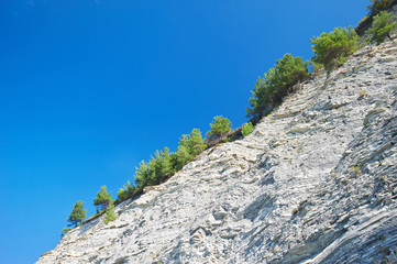 Trees and stone of cliff rocks