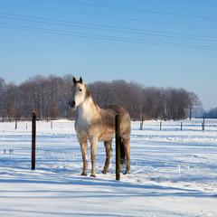 Horse in winter landscape