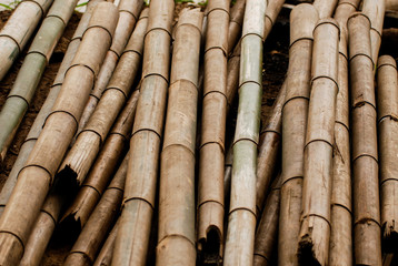 Dry thick bamboo pole