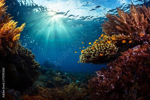 Indonesia - 71595366