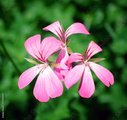 canvas print picture 3 Blumen zusammen