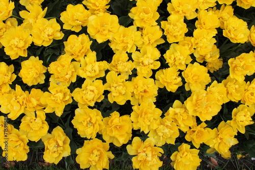 canvas print picture Fleur jaune