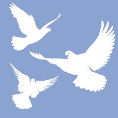 fliegende weiße Tauben