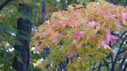 紅葉/日本で初めに色づく北海道の秋_18