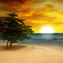 sea beach, a tree and a fantastic sunset