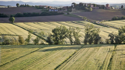 Typical summer landscape in Tuscany early in the morning, pannin
