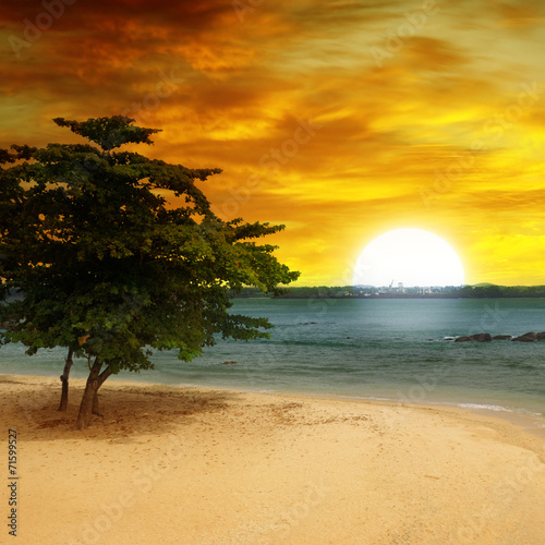 sea beach, a tree and a fantastic sunset - 71599527