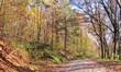 canvas print picture - Herbstlicher Wald