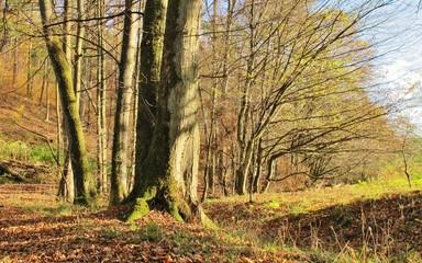 Herbstlicher Wald
