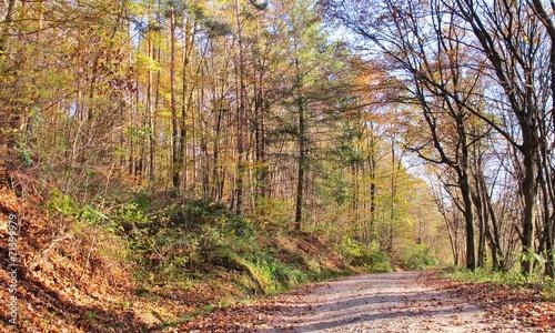 canvas print picture Herbstlicher Wald