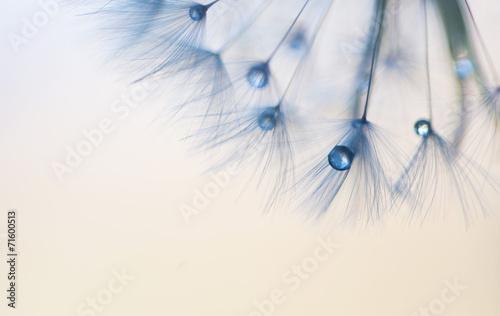 Нежные капли © vkuzmenko