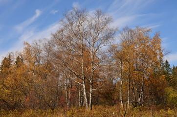 Опали листья