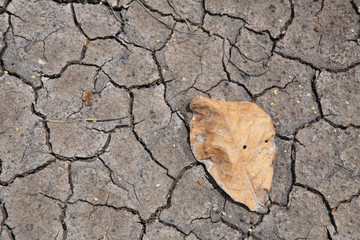 dry  leaf on the cracked earth