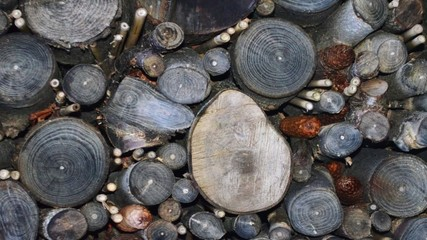 Zoom In On Growth Rings, Xylem And Heartwood In Logs