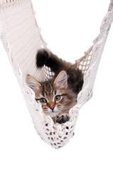 Katzenbaby in der Hängematte