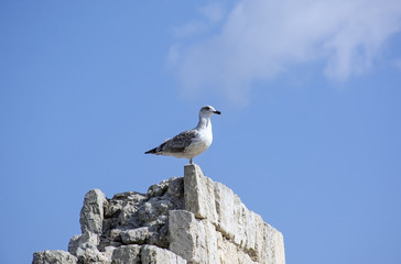 the Marine gull on rest