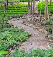 Plant in nursery in green forest