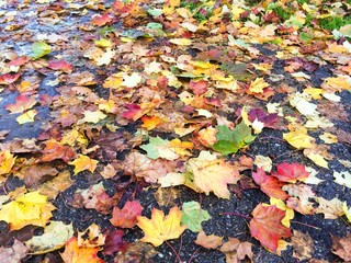 Herbstlaub auf der Straße