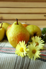 Ripe pears and autumn chrysanthemum.