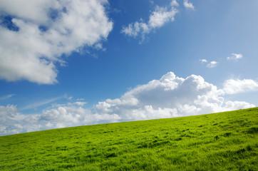 Grüne Wiese mit Wolkenhimmel Landschaft Umwelt sauber