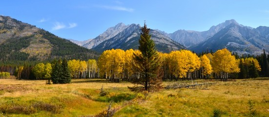 Panoramic autumn image of a mountain landscape, Banff, Canada