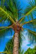 canvas print picture - Rest in Paradise - Malediven - Palme von unten