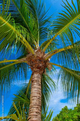 canvas print picture Rest in Paradise - Malediven - Palme von unten