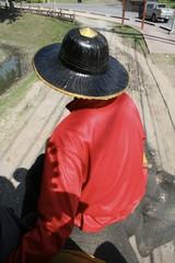 Ayutthaya City Elephant ride, Thailand