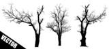 Fototapety Dead trees