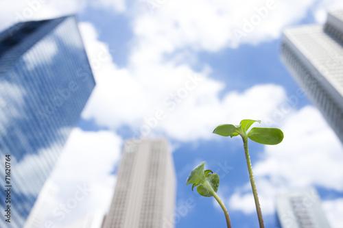 高層ビルとヒマワリの芽