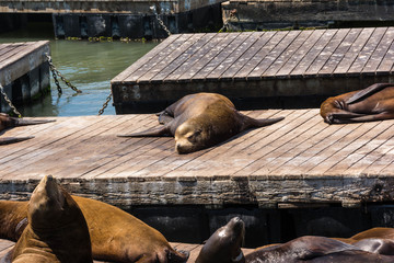 Sea lions sleeping on the piers