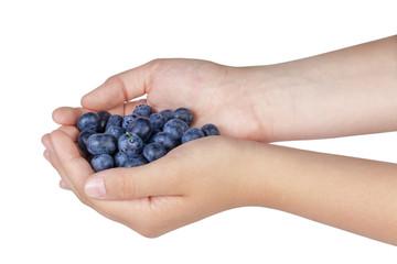 female teen hands holding ripe blueberries
