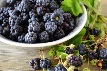 forest fresh blackberries in a bowl