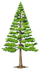 A green pine tree