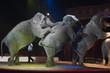 canvas print picture - circus elephant