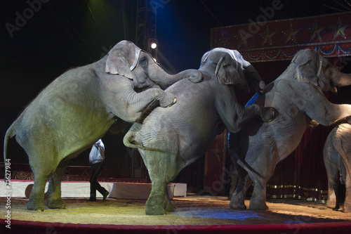 Foto op Canvas Olifant circus elephant