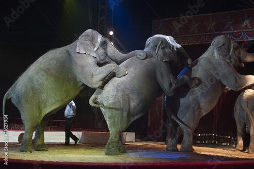 canvas print picture circus elephant