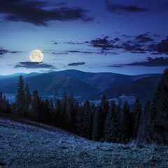 coniferous forest on a  mountain slope at night