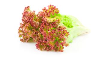 Lettuce leaves red