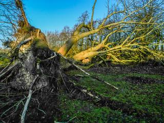 Gewalt des Natur Sturmschaden