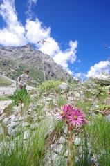 flore alpine - oisans