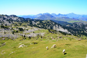 cows in Larra-Belagua meadows