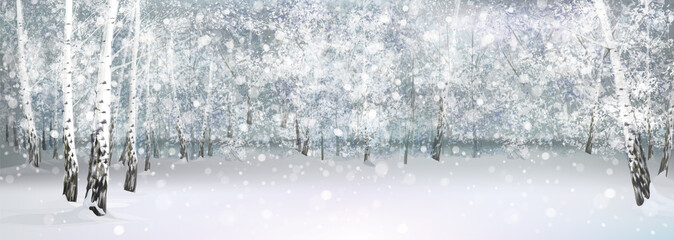 Vector winter snowy landscape, birch forest.