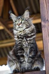 портрет кошки,вид снизу