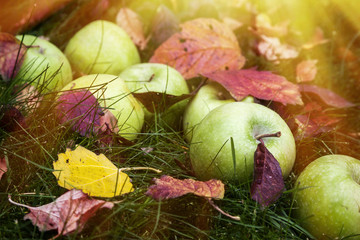 Green apples on grass.