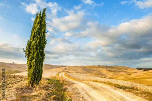 Solitary cypress guardian of the road - 71635335