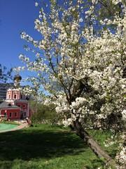 церковь и яблоня в цвету