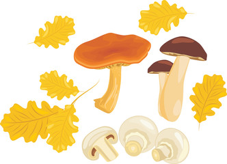 Mushrooms with oak leaves